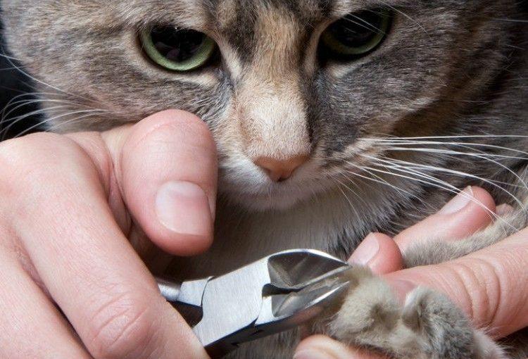 Cómo debo cortarle las uñas a mi gato