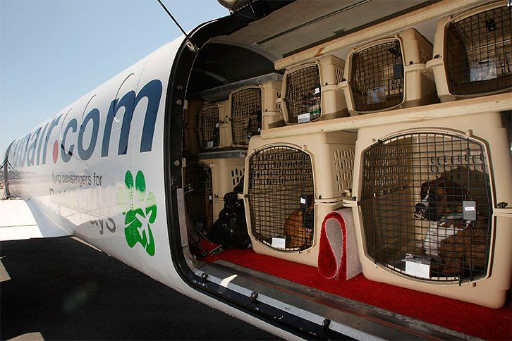 Cuidados a tener para llevar de viaje a tu mascota recomendación 2