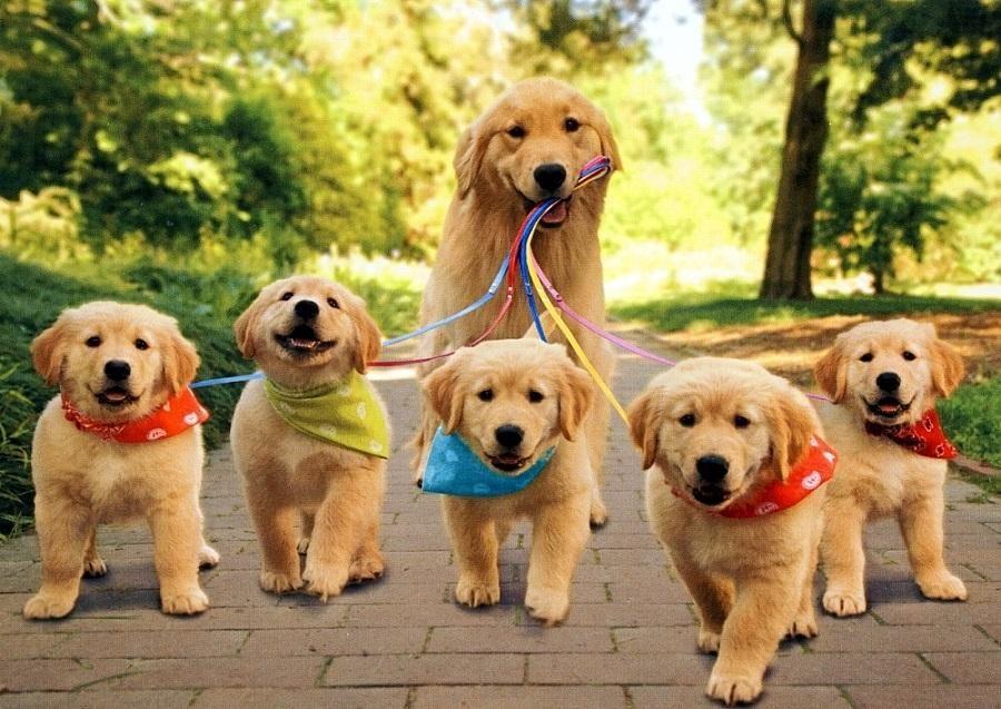 Cuidados de una perra en su gestación y parto