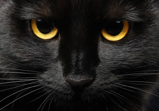 El mito de las 7 vidas de los gatos