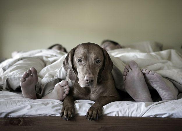¿Es peligroso dormir con mi mascota?