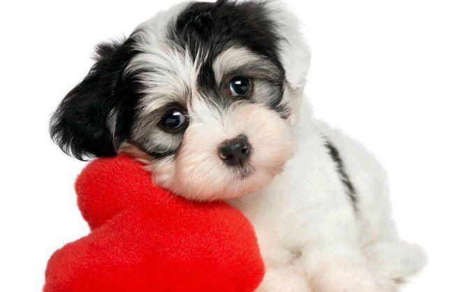 Adopte un cachorro qué debo hacer