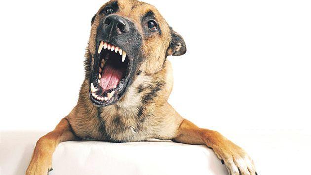 Cómo curar un perro con rabia
