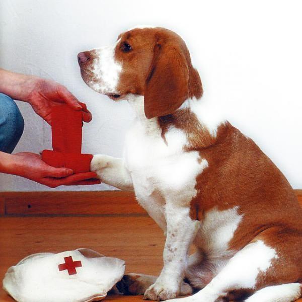 Cómo dar los primeros auxilios a mi mascota verificar fracturas