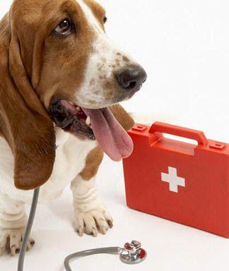 Cómo dar los primeros auxilios a mi mascota