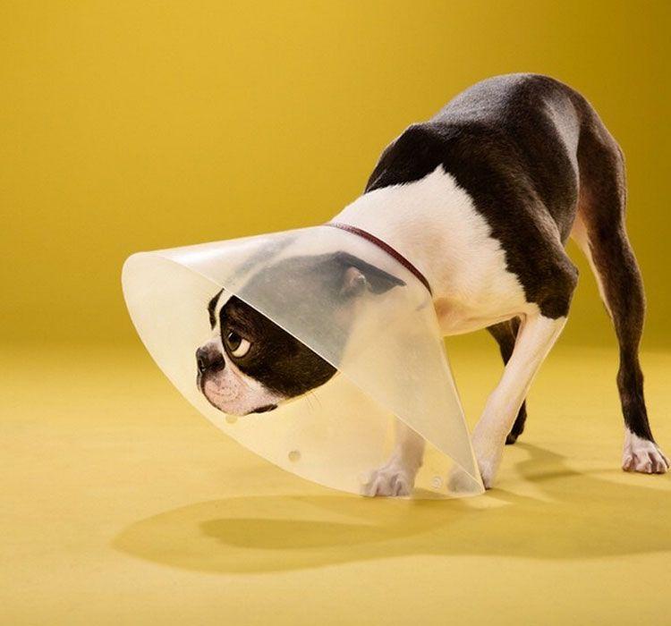 Cómo desparasitar a tu perro cono