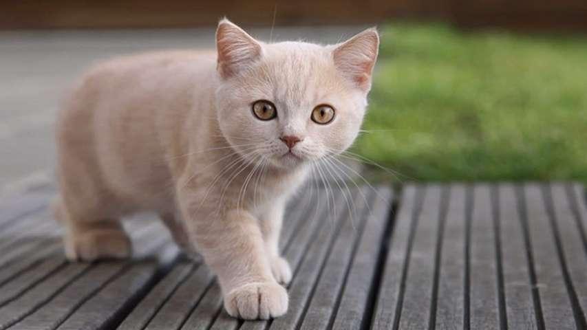 Cómo educar a tu gato a no ensuciar