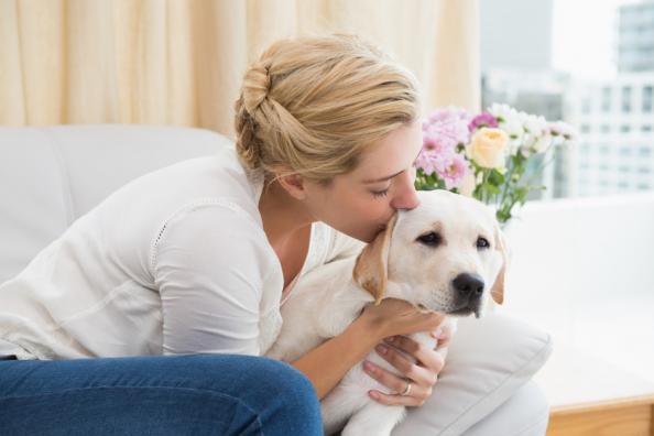 Cómo enseñar a tu perro a no hacer sus necesidades en la casa
