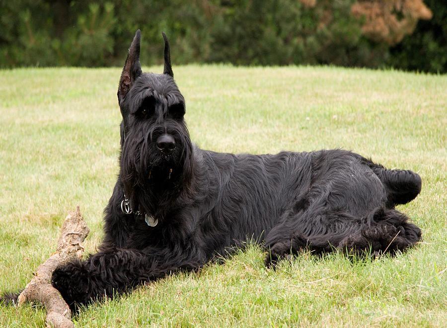 10 Razas de perros para excelentes guardianes