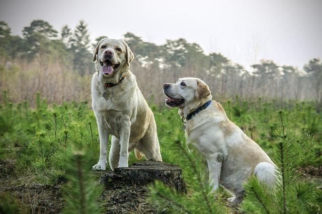 Ventajas de tener un perro grande
