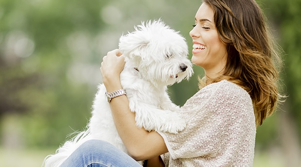 Ventajas de tener un perro pequeño