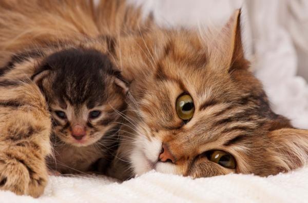 a los cuántos días se debe de vacunar por primera vez a un gatito