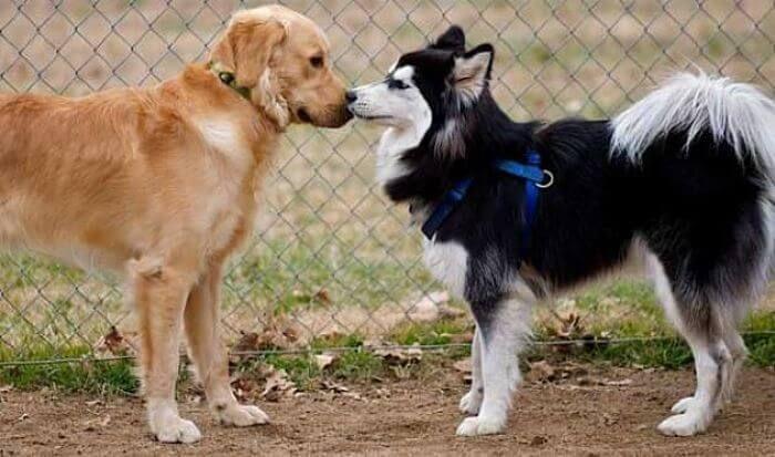 Cómo evitar el celo de tu perra