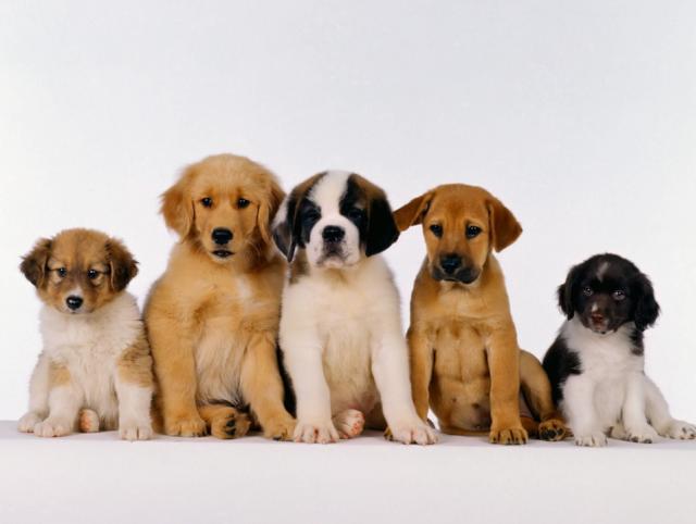 A qué edad es mejor educar a un can
