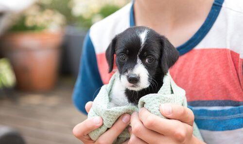 Adopte un cachorro ¿Qué sigue después?