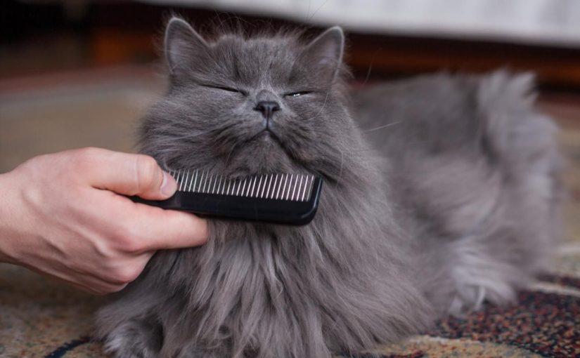 ¿Cómo cuidar el pelaje de mi gato?