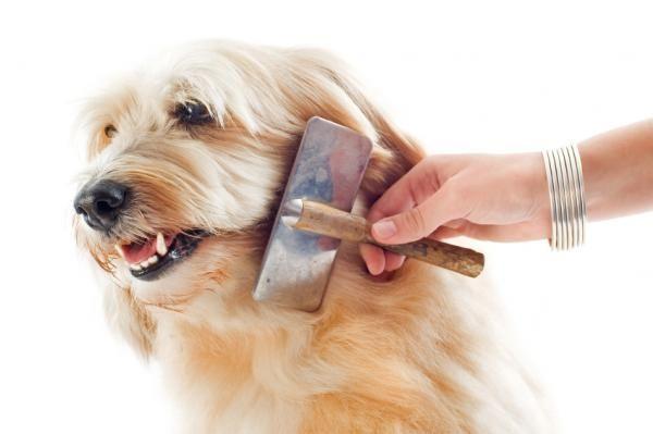 ¿Cómo cuidar el pelaje de mi perro?