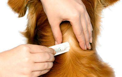 Cómo desparasitar a tu perro
