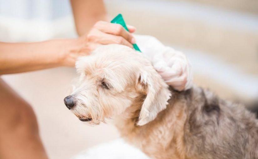 ¿Cómo evitar que mi perro se llene de pulgas?