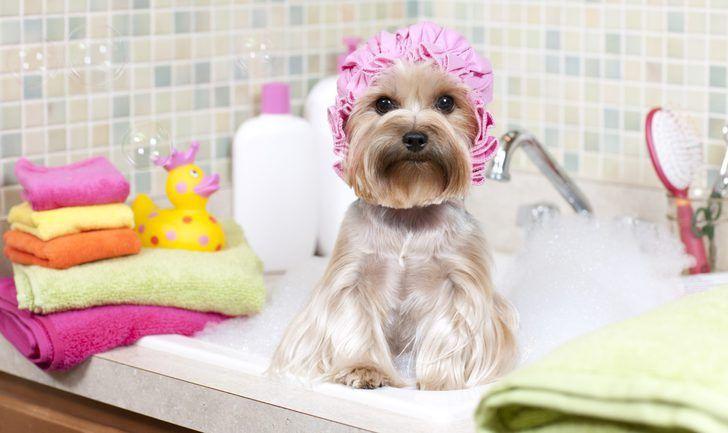 Cada cuántos días es recomendable bañar a mi perro
