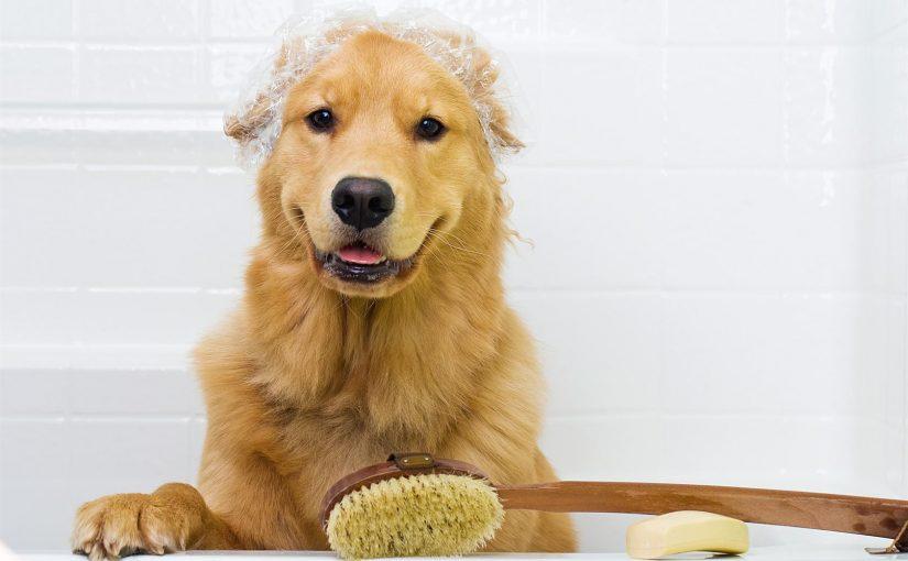 Cómo debes bañar a tu perro