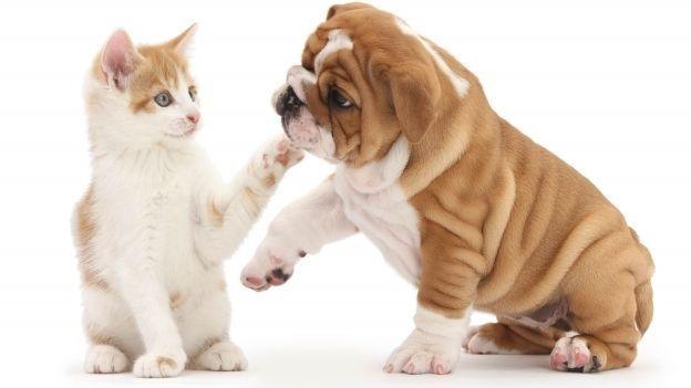 Cuál es mejor mascota, el perro o el gato ¿Qué debo elegir?