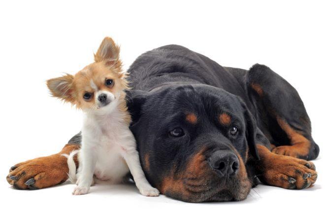 Cuáles son los nombres de perros más comunes