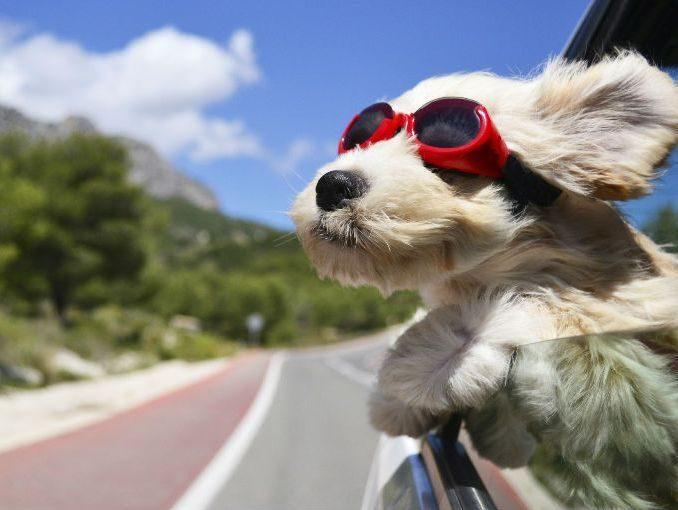 Cuidados a tener para llevar de viaje a tu mascota