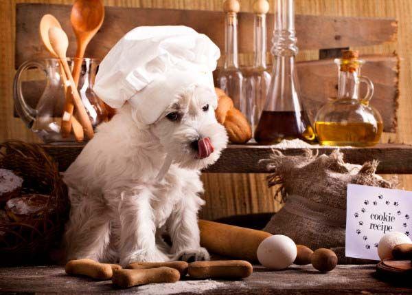 ¿Es recomendable dar comida casera a un cachorro?