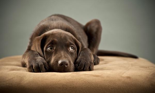 ¿Qué riesgo corre mi perro si no lo llevo al veterinario nunca?