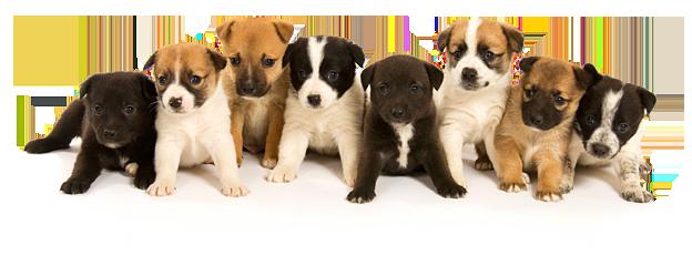 Razas más amigables de perros