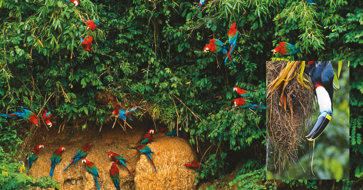 El Amazonas, un Paraíso Tropical para Los Loros