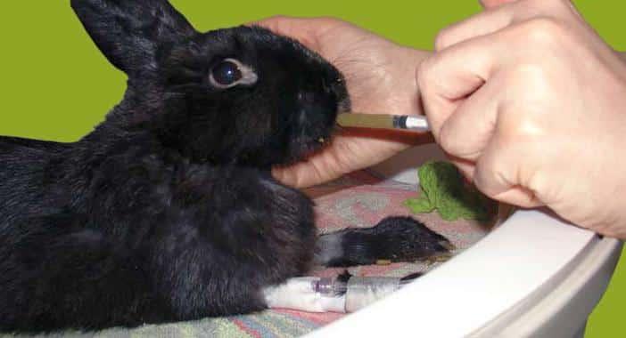 conejo enfermo 4
