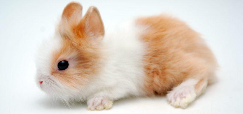 conejo toy imagen 3