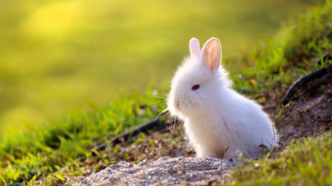 conejo toy imagen
