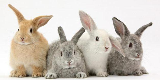 conejos imagen 2
