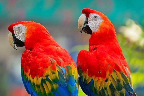La Guacamaya Macao, el Ave Multicolor más Hermosa del Mundo